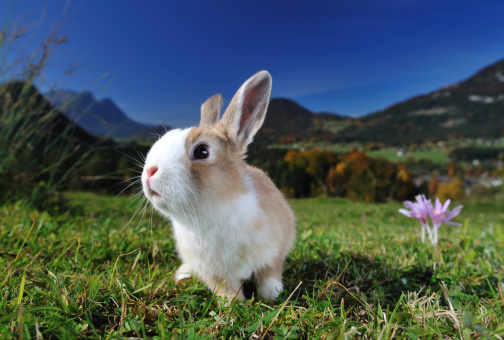 Easter Bunny「Easter Bunny」:スマホ壁紙(0)