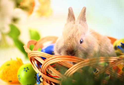 Easter Bunny「Easter bunny.」:スマホ壁紙(16)