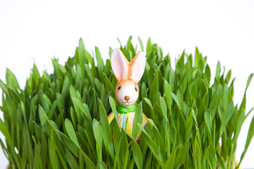 Easter Bunny「Easter bunny in grass, close-up」:スマホ壁紙(16)