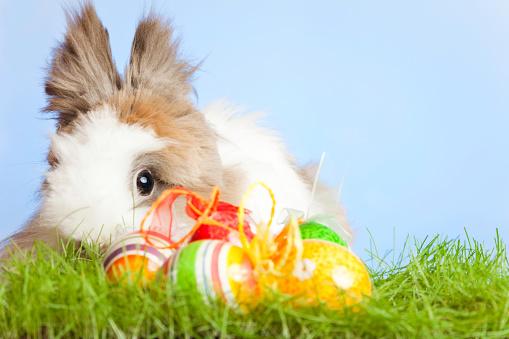 イースター「イースターのウサギと卵」:スマホ壁紙(3)