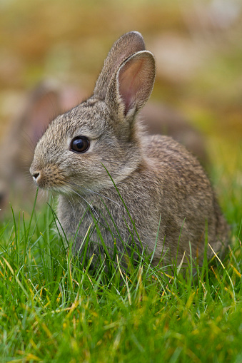 Baby Rabbit「Easter Bunny」:スマホ壁紙(6)