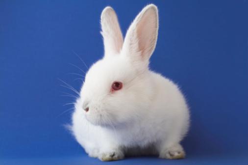Baby Rabbit「Easter bunny」:スマホ壁紙(7)