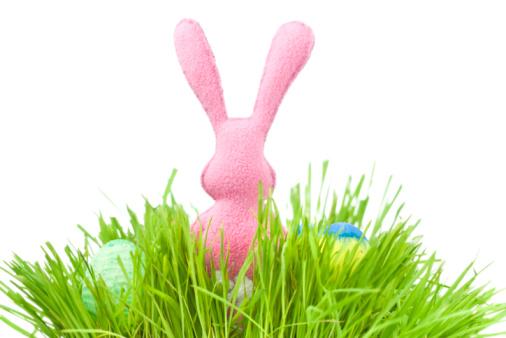 Easter Bunny「Easter bunny」:スマホ壁紙(7)