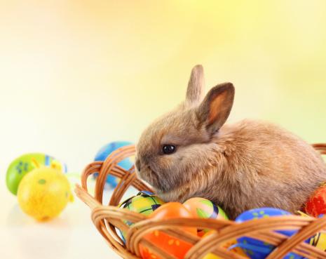Easter Basket「Easter bunny and eggs.」:スマホ壁紙(6)