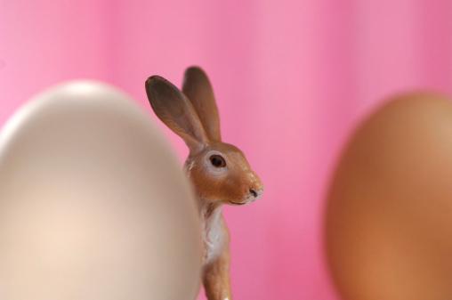 Easter Bunny「Easter bunny and egg」:スマホ壁紙(6)