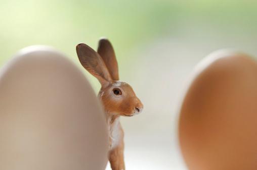 Easter Bunny「Easter bunny and egg」:スマホ壁紙(11)