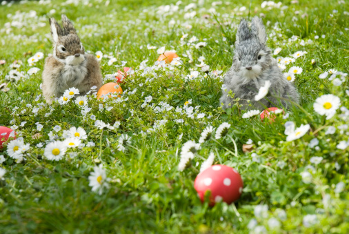 Easter Bunny「Easter bunnies and eggs in meadow」:スマホ壁紙(17)