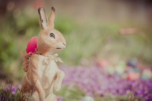Easter Bunny「Easter bunny in garden」:スマホ壁紙(6)