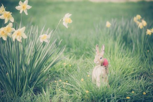 イースターバニー「Easter bunny in garden」:スマホ壁紙(16)