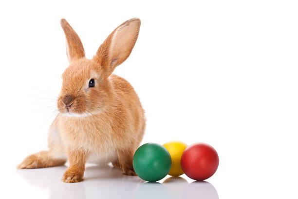 Easter bunny with three Easter eggs:スマホ壁紙(壁紙.com)