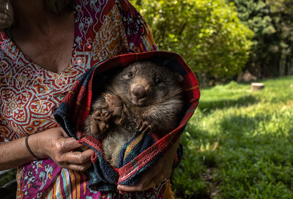 Healthcare Worker「The Survivors: Saving Australian Wildlife Following Fires And Drought」:写真・画像(6)[壁紙.com]