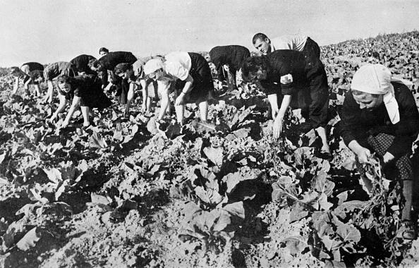 Weekend Activities「Soviet Farmers」:写真・画像(18)[壁紙.com]