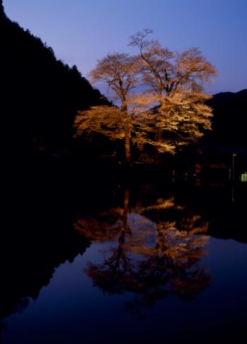 夜桜「Nawashiro-zakura, Gero, Gifu, Japan」:スマホ壁紙(17)