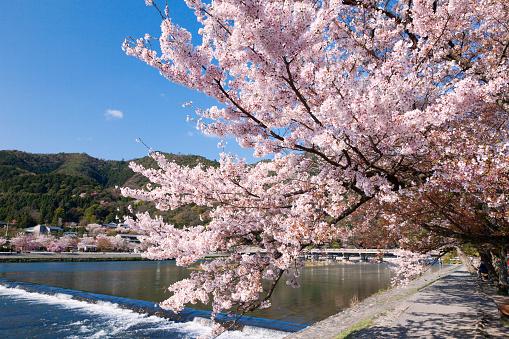 Arashiyama「Togetsukyo Brige and Hozu River in Spring」:スマホ壁紙(10)