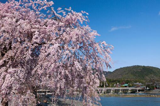 Arashiyama「Togetsukyo Brige and Hozu River in Spring」:スマホ壁紙(15)