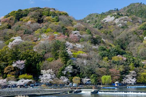 桜「Togetsukyo Brige and Hozu River in Spring」:スマホ壁紙(5)