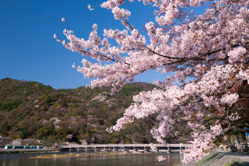 Arashiyama「Togetsukyo Bridge and Hozu River in Spring」:スマホ壁紙(11)