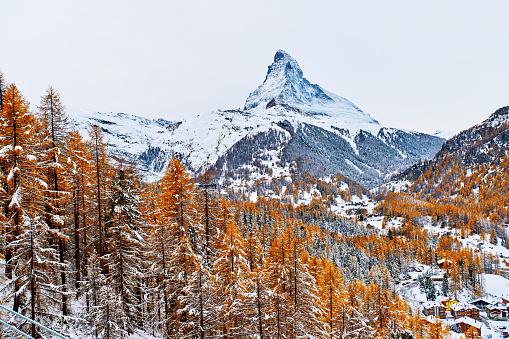 Larch Tree「Matterhorn, Zermatt, Switzerland」:スマホ壁紙(17)
