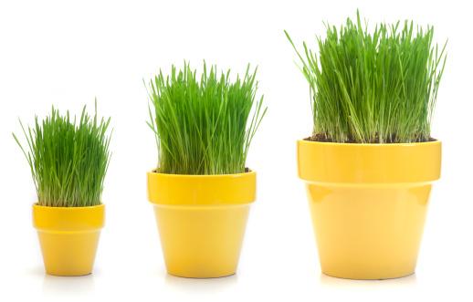 Contrasts「Growing Wheat Grass」:スマホ壁紙(4)
