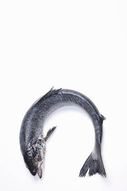 Fresh, wild caught, Coho salmon:スマホ壁紙(壁紙.com)