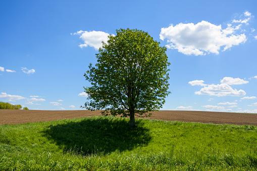 Chestnut「Chestnut tree in spring, Baden-Wurttemberg, Germany」:スマホ壁紙(6)