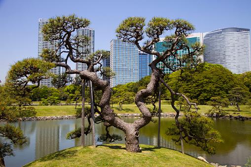 Shiodome「Japan, Tokyo, Hama-riku garden」:スマホ壁紙(5)