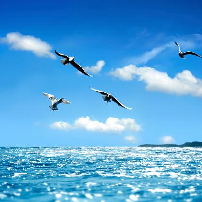 鳥「seaside」:スマホ壁紙(13)