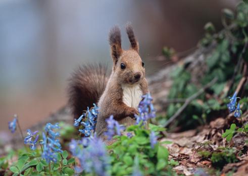 Tree Squirrel「Ezo Squirrel」:スマホ壁紙(11)