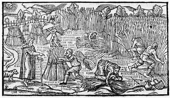 16世紀のスタイル「Harvesting Scene」:写真・画像(1)[壁紙.com]