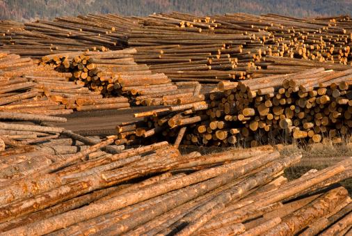 Deforestation「Log storage area at lumber mill」:スマホ壁紙(3)