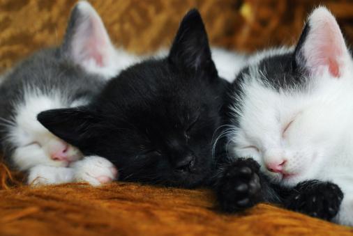 Mixed-Breed Cat「kitten」:スマホ壁紙(13)