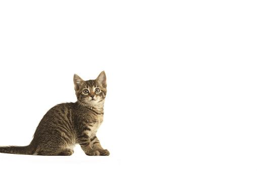 子猫「Kitten」:スマホ壁紙(2)