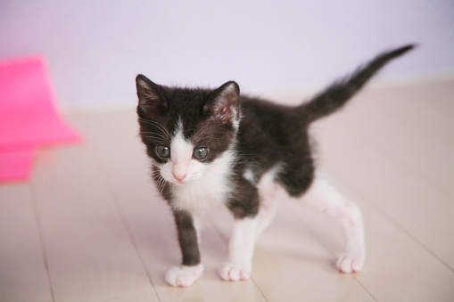 Kitten「Kitten」:スマホ壁紙(4)