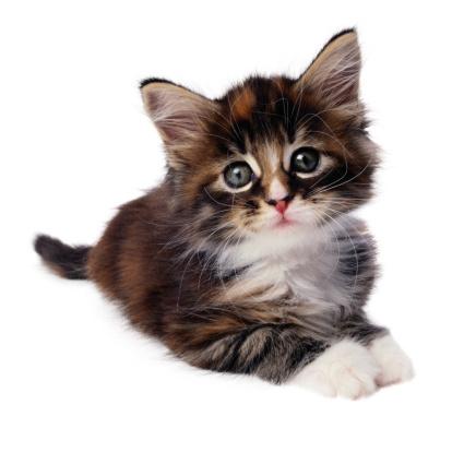 子猫「Kitten」:スマホ壁紙(0)