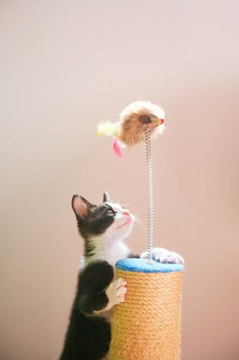 Kitten「Kitten」:スマホ壁紙(5)