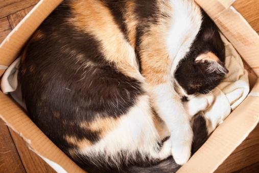 Mixed-Breed Cat「kitten」:スマホ壁紙(12)