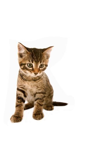 子猫「Kitten」:スマホ壁紙(4)