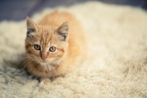 雑種のネコ「キトン」:スマホ壁紙(10)