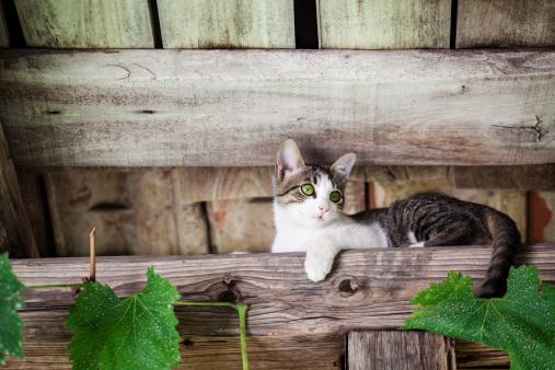 Mixed-Breed Cat「Kitten」:スマホ壁紙(11)