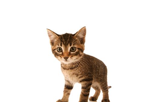 子猫「Kitten」:スマホ壁紙(1)