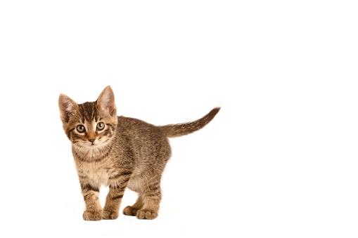 子猫「Kitten」:スマホ壁紙(3)