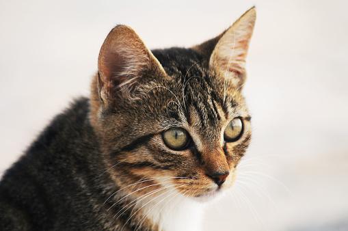 子猫「Kitten」:スマホ壁紙(6)