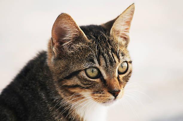 Kitten:スマホ壁紙(壁紙.com)
