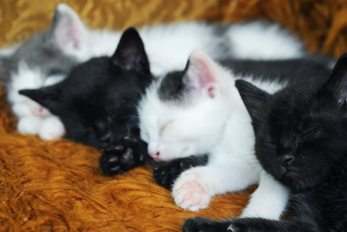Mixed-Breed Cat「kitten」:スマホ壁紙(9)