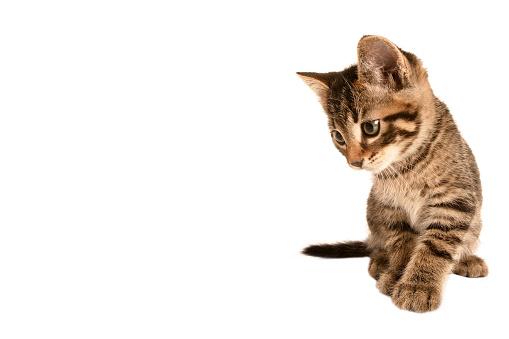 子猫「Kitten」:スマホ壁紙(5)