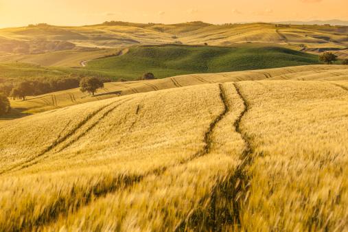 Plowed Field「Sunset Tuscany landscape」:スマホ壁紙(14)