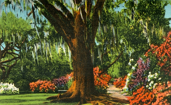 Charleston - South Carolina「Scene In Magnolia Gardens」:写真・画像(14)[壁紙.com]