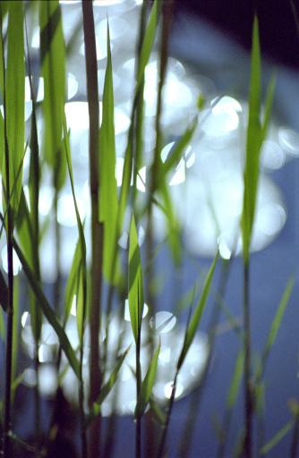 恋愛運「Grass」:スマホ壁紙(16)