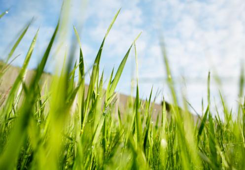 Fresh Green「grass」:スマホ壁紙(17)