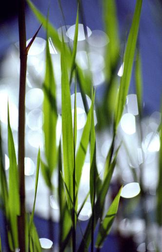 朗らか「Grass」:スマホ壁紙(6)